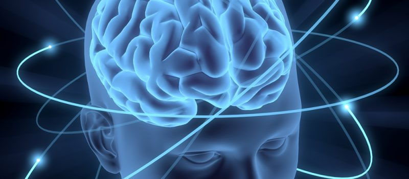 Image of human brain for Concussion blog